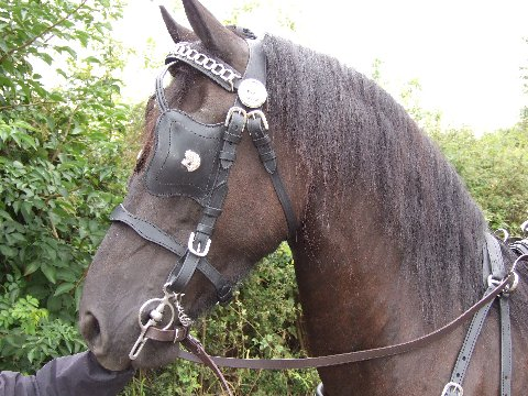 Friesian harness